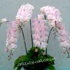 Горшки для орхидей и фаленопсисов