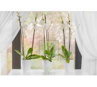 Вазон Орхидея 2 л
