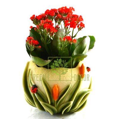 Кашпо для цветов С камышами - оригинальный подарок для родных и близких