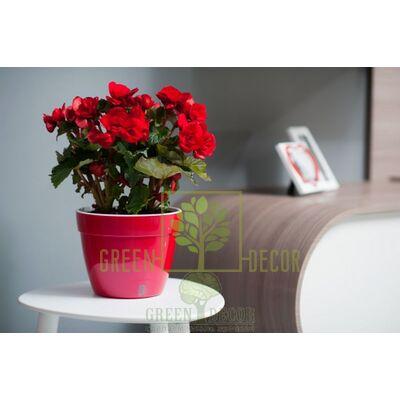 Горшок для цветов ASTI 6 л.