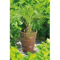 Горшок Дерево ПАЛЬМА-3 коричневый 15 л