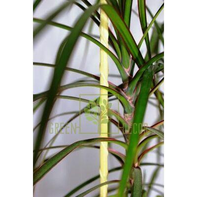 Опора композитная для растений и цветов PCBP-90 см