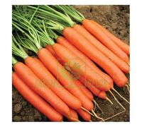 Морковь Нантес Тип топ 1 г, Професійне насіння